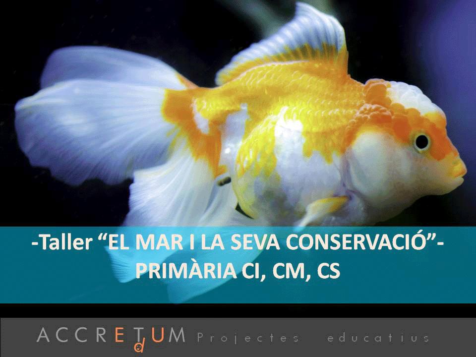 Taller_El_mar_conservacio_P